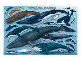 Whales and Dolphins Prints