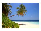Palm-lined Beach at the Angsana Ihuru Hotel, Ihuru Island, North Male Atoll, Maldives Posters