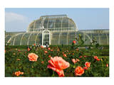 Palm house in the Royal Botanic Gardens, Kew, London, South of England, Great Britain Prints