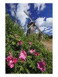 Windmill near Benz in the Achterland Region, Island of Usedom, Germany Prints