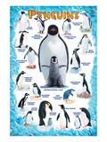 Penguins for Kids Posters