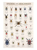 Spiders and Arachnids Plakater