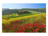 Landscape near San Quirico d'Orcia, Val d'Orca, Province of Siena, Tuscany, Italy Prints