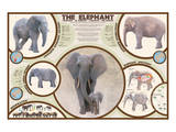 The Elephant Prints