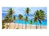 Beach at Bottom Bay, St. Philip, Barbados, Caribbean Art