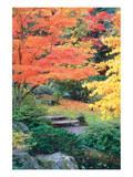 Fall Solitude Prints