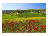 Landscape near San Quirico d'Orcia, Val d'Orca, Province of Siena, Tuscany, Italy Poster