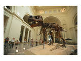 Tyrannosaurus Rex (Sue), Field Museum in Chicago, Illinois, USA Prints