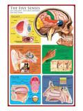 The Five Senses Prints