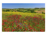 Landscape near Volterra in Spring, Province of Pisa, Tuscany, Italy Posters