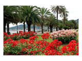 Palm-lined Promenade at the Gulf, City of La Spezia, Italian Riviera, Liguria, Italy Prints