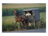 Amish man in typical coach, Pennsylvania, USA Plakat
