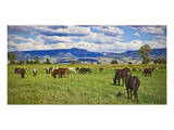 Horse farm in Grand Teton National Park, Wyoming, USA Prints
