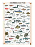 Mediterranean Fish Prints