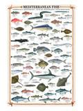 Mediterranean Fish Kunstdrucke