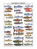 Salmon and Trout Kunstdrucke