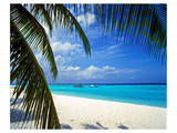 Palm-lined Beach on the Island of Bandos, North Male Atoll, Maldives Prints