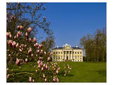 Blooming Magnolia and Woerlitz Castle at Woerlitz Gardens, Saxony-Anhalt, Germany Posters