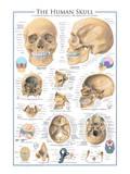 The Skull Prints