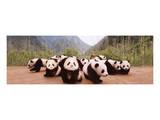 Panda Cubs Art