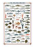 Fish Shellfish and Mollusk Stampe