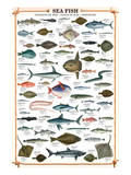 Sea Fish Prints