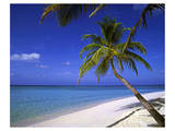 Palm-lined Beach on the Island of Bandos, North Male Atoll, Maldives Affiches