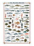 Fish Shellfish and Mollusk Posters