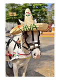 Horse with Straw Hat in Valladolid, Yucatan Peninsula, Mexico Print