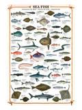 Sea Fish Posters