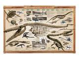Prehistoric Marine Reconstruct Prints