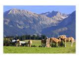 Haflinger horses on pasture at Allgaeu Alps, Allgaeu, Swabia, Bavaria, Germany Posters