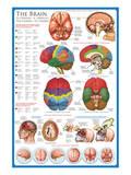 The Brain Print