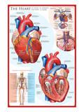The Heart Print