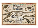 Prehistoric Marine Reconstruct Art