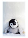 Penguin Chick Print