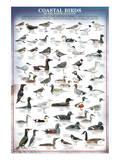 Coastal Birds Poster