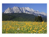 View over meadows towards the Wettersteinwand near Garmisch-Partenkirchen, Bavaria, Germany Posters