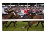 Horse race in Ballinrobe, County Mayo, Connacht, Ireland Posters