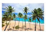 Beach at Bottom Bay, St. Philip, Barbados, Caribbean Prints