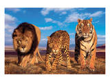 Three Big Cats Poster