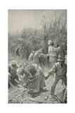 Negroes at Work in a Sugar-Cane Plantation in Jamaica Giclee Print by Joseph Finnemore