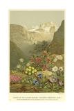 Plants of the Alpine Region, the North Limestone Alps Giclee Print