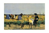 Harvesting Rice in Low Lands of Verona Giclee Print by Giacomo Favretto