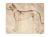 Study of Hunt Dog Giclee Print by Antonio Pisano