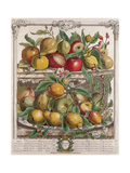April, from 'Twelve Months of Fruits', by Robert Furber Giclee Print by Pieter Casteels
