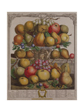 December, from 'Twelve Months of Fruits' Giclee Print by Pieter Casteels