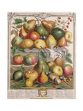 January, from 'Twelve Months of Fruits' Giclee Print by Pieter Casteels