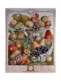 November, from 'Twelve Months of Fruits' Giclee Print by Pieter Casteels
