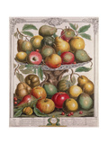 February, from 'Twelve Months of Fruits' Giclee Print by Pieter Casteels
